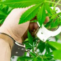 Marijuana4